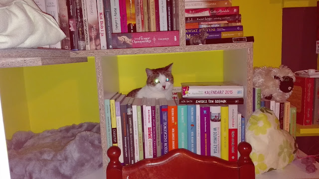koty, zabawki dla kota, nietypowe półki na książki, jak zorganizować czas kotu, Brujita, na zamówienie, sypialnia dla kotów