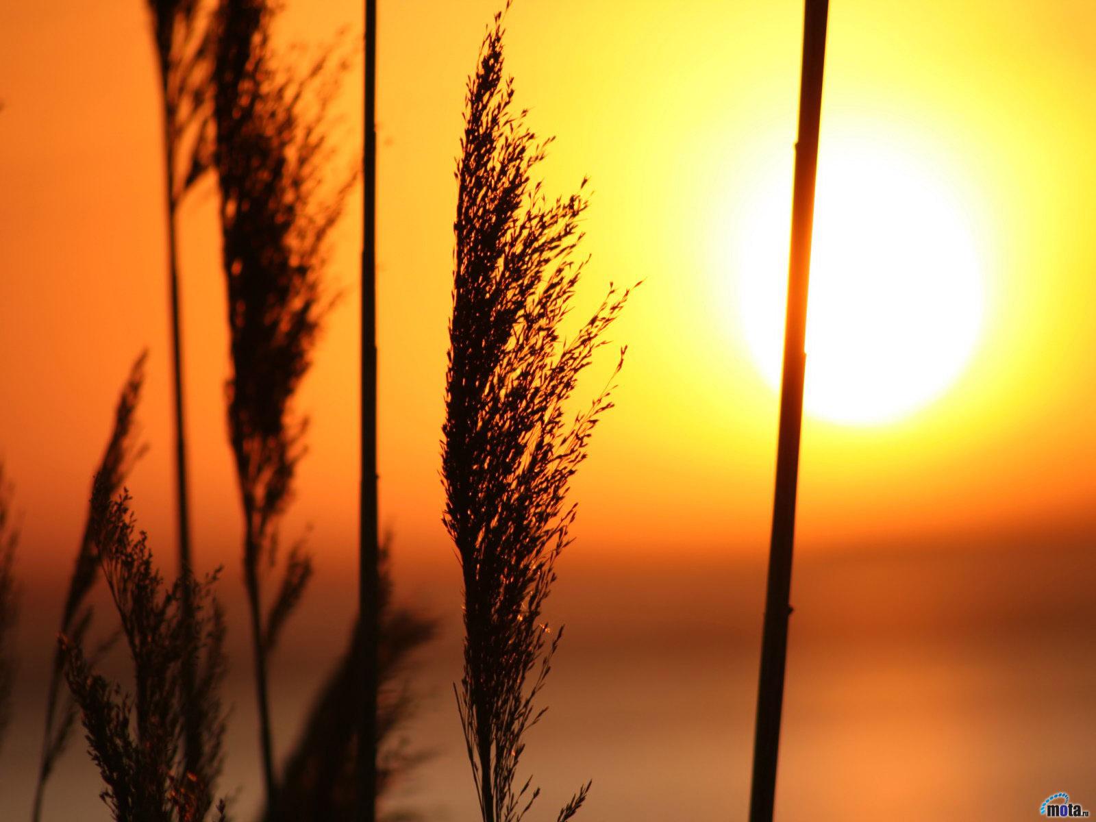 Backgrounds: 5 Beautiful Nature