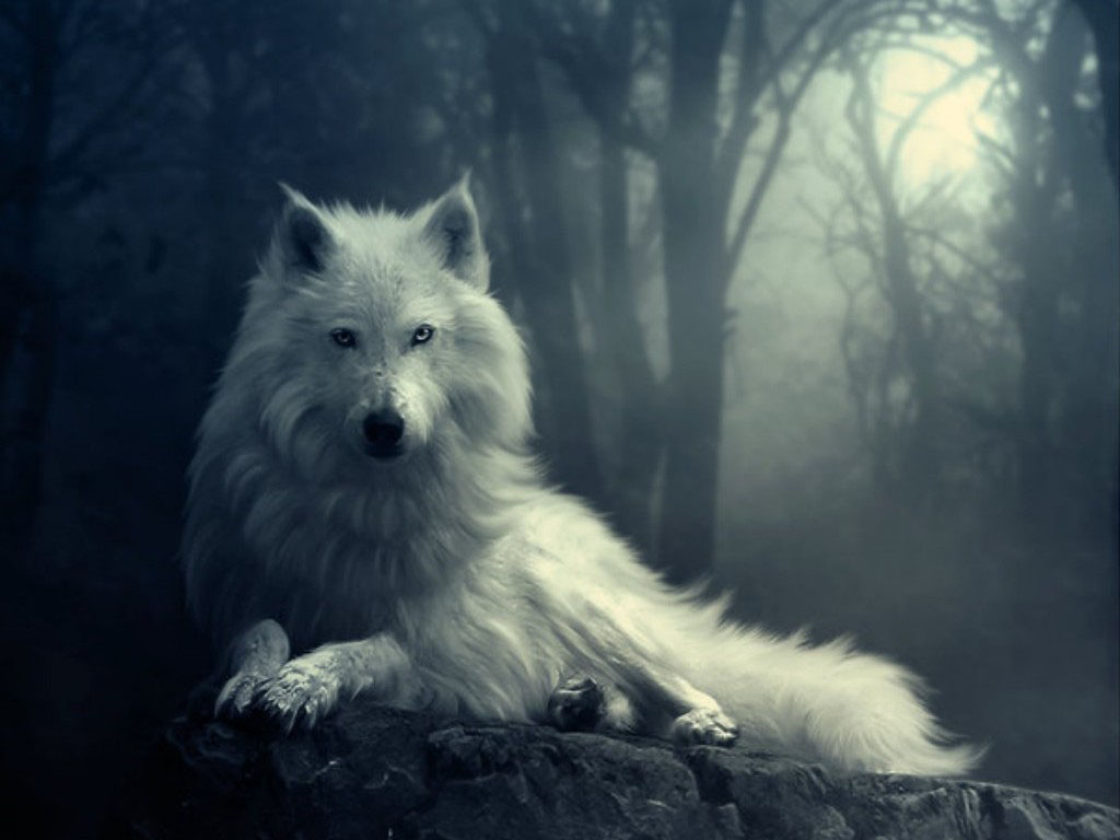 Wolf+in+Winter+Wallpapers+%25281%2529