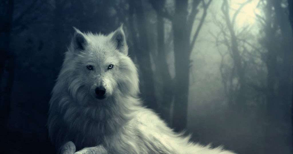 Cute Babies Hd Wallpapers 1366x768 Wallpapers Wolf In Winter Wallpapers