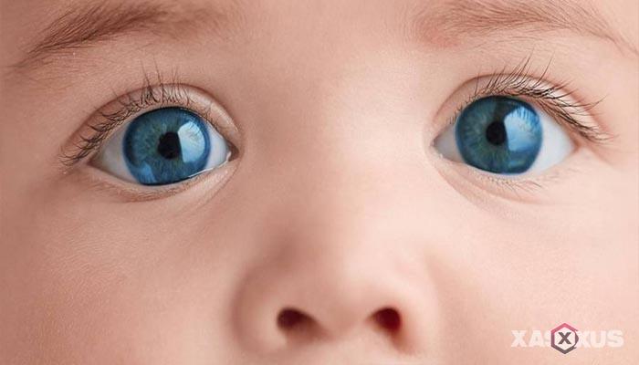 Fakta 5 - Janin 21 minggu mulai mempunyai alis dan kelopak mata