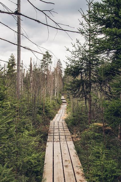 Rundtour durchs Hochmoor im Nationalpark Bayerischer Wald 05