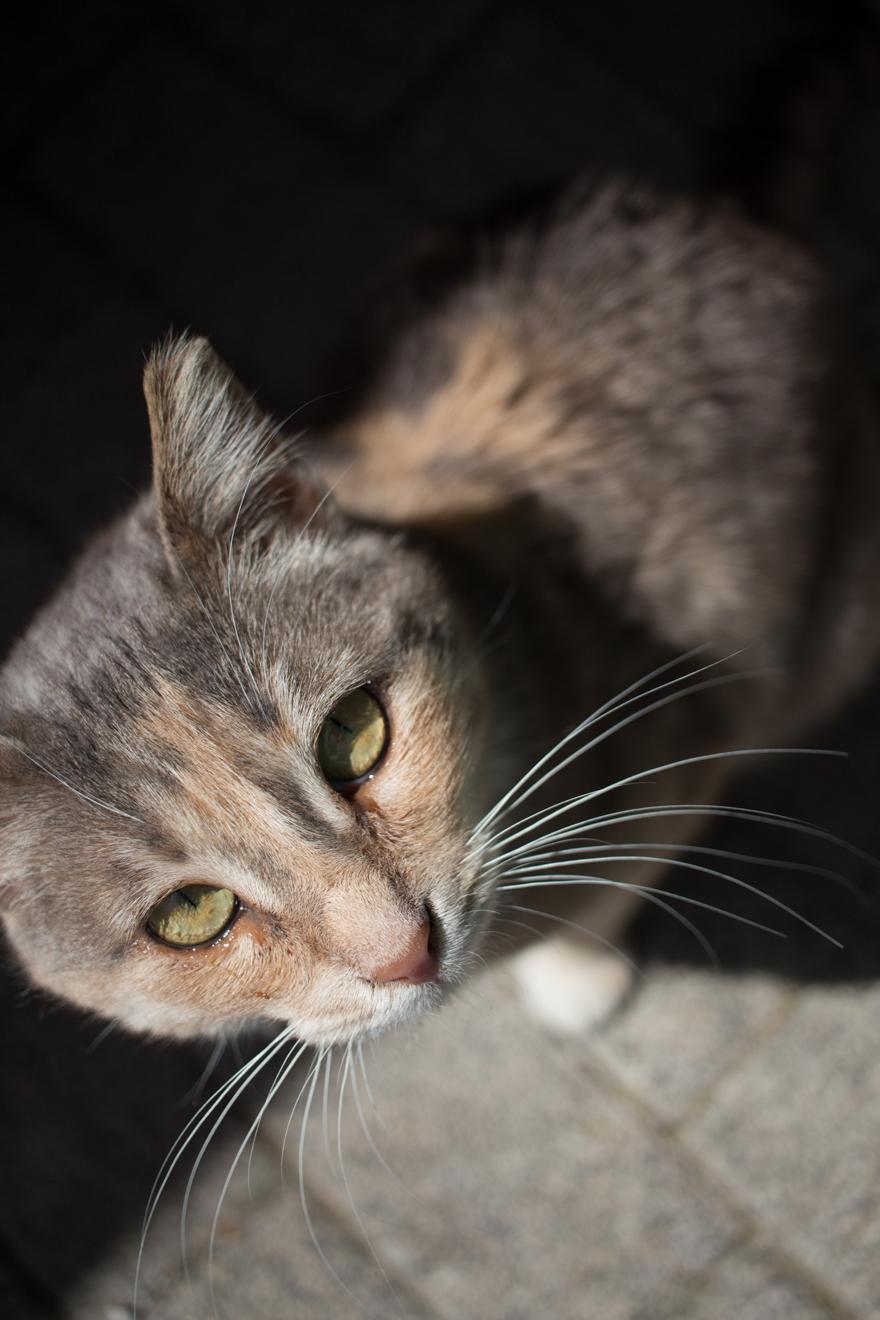 LinnDubh - Istanbul - 8 Tipps für deinen Urlaub in Istanbul - Katzen