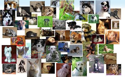 Доска бесплатных объявлений для животных