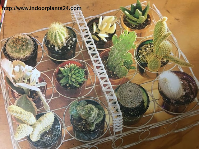 Introduction Of Indoor Plants And House Plants
