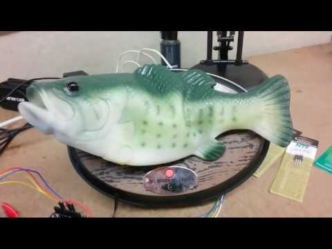 Man Hacks His Alexa Into A Singing Fish Robot And It's Horrifying