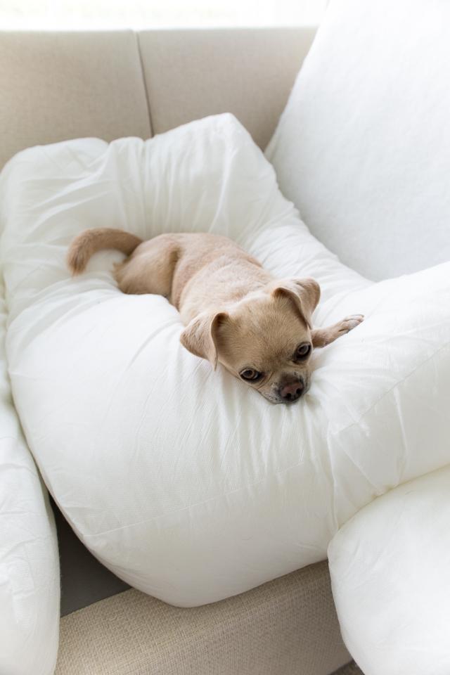 villa h, chihuahua, sohvan pesu, siivouspäivä, toimivampi arki