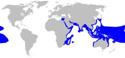 Penyebaran wilayah Ikan Hiu Karang Blacktip