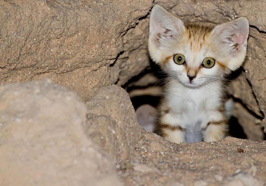 sand-cats-kittens-forever-7