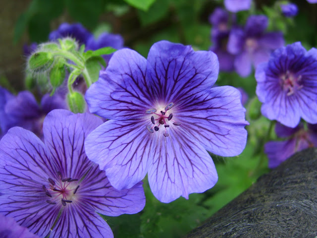 Inilah 5 Jenis Tanaman Bunga yang Dapat Memperharum Ruangan Anda