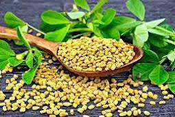 النبات الذهبي جميع فوائد الحلبة الصحية للجسم