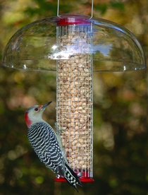 Wild Birds Unlimited How To Keep A Woodpecker Off Wood Siding
