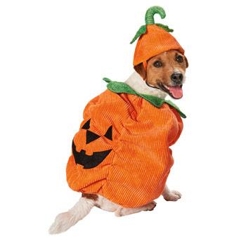 disfraces de halloween para perros calabaza