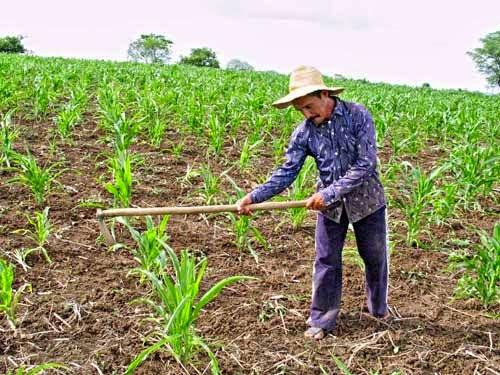 Resultado de imagem para imagens agricultores plantando