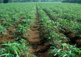 AGRICULTURE OPPORTUNITIES IN PLATEAU STATE PLATEAU 2BSTATE5