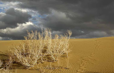 Sand dune and tamarisk bushes in Varzane Desert.