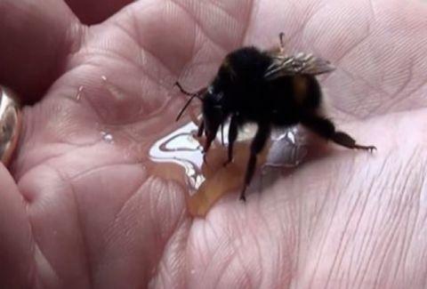 Βρήκε μία παγιδευμένη μέλισσα και της έσωσε τη ζωή. Όταν δείτε τι έκανε για να τον ευχαριστήσει, δεν θα το πιστεύετε