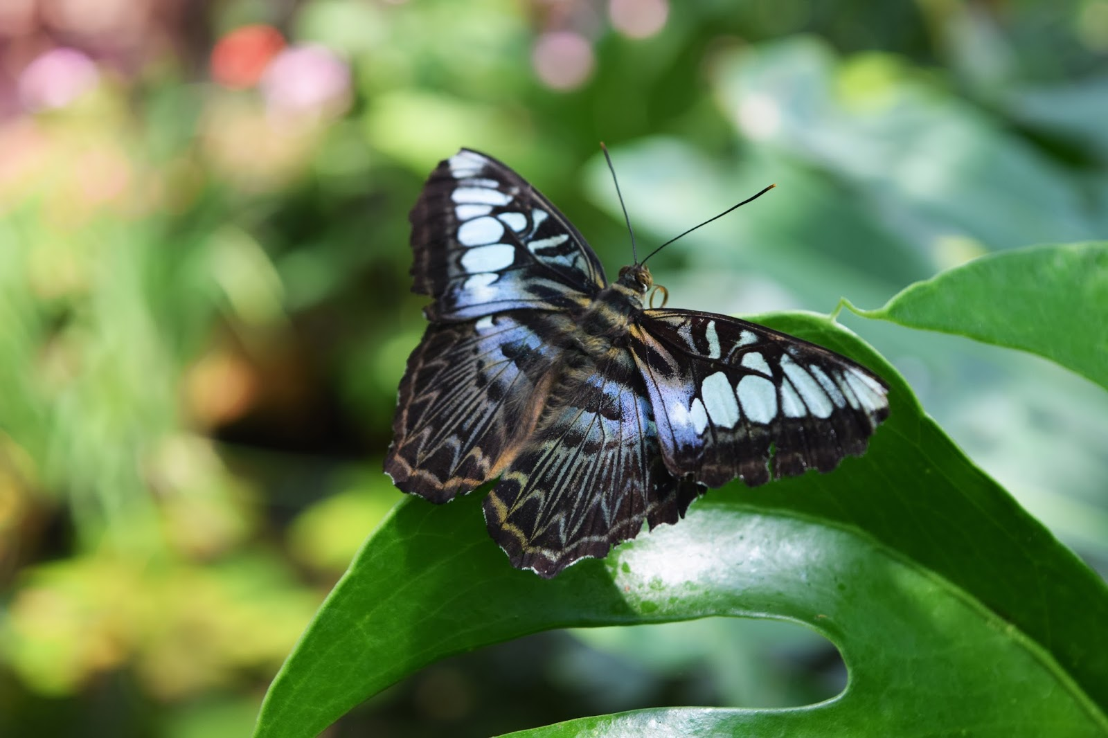 a blue butterfly perched on a leaf