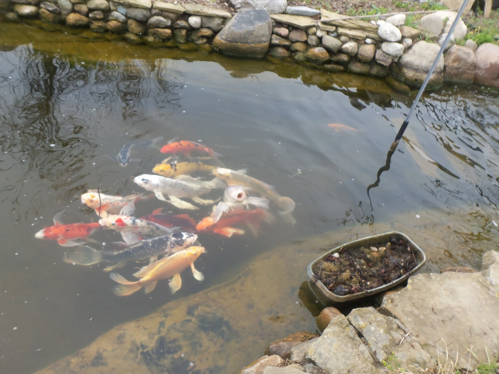 A primitive plot lovin 39 grass roots nursery for Pond fish wanted