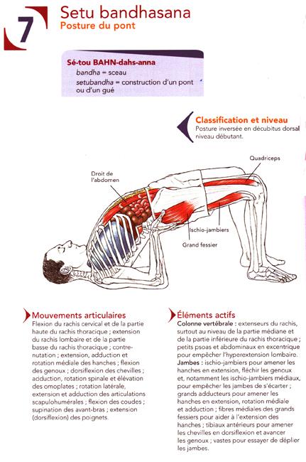 Yoga Musicothérapie: Posture de yoga n°5 : Le demi-pont