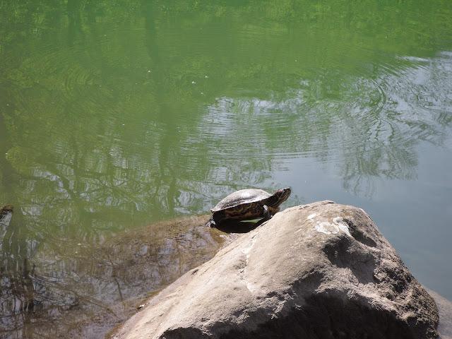 Lago Pontini tra le montagne romagnole