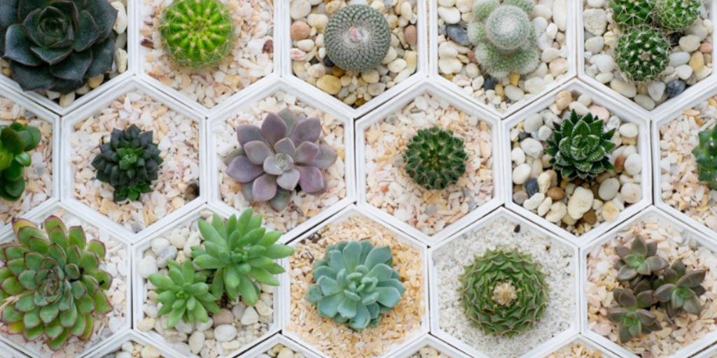 Cómo plantar un arreglo de cactus