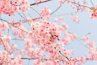E' iniziata davvero la primavera? Un vero dramma climatico in atto