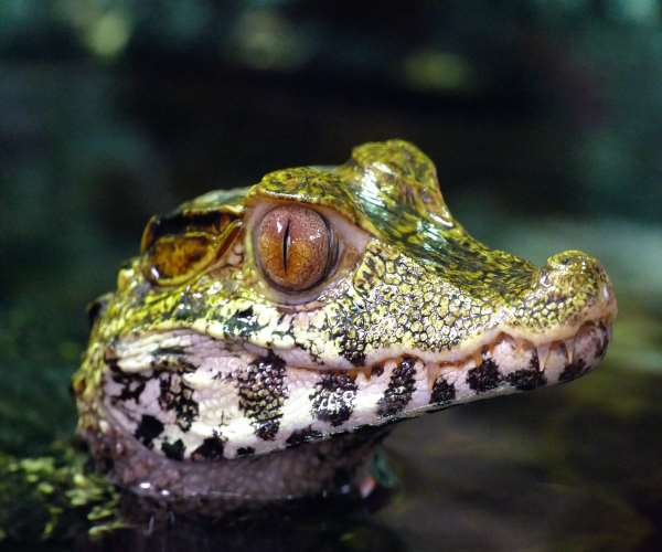 http://www.bioorbis.org/2018/06/jacare-crocodilo-qual-diferenca.html