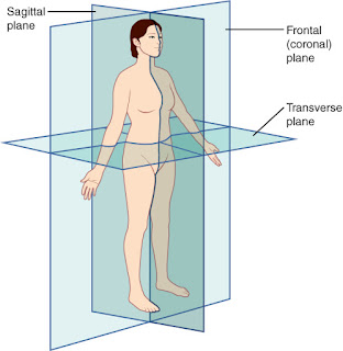 The three planes of motion: frontal, sagittal and transverse