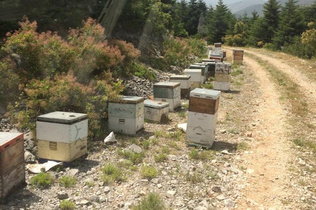 Πωλείται μέλι στην Θεσπρωτία