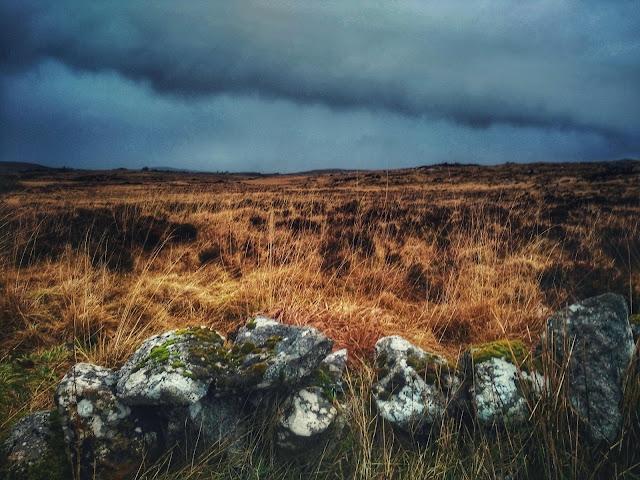 gogs, golden grass, Connemara landscape, dark moody sky