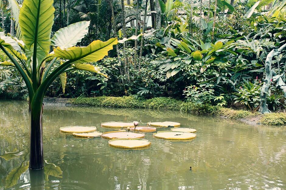 cosa vedere singapore giardini botanici