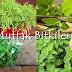 Mutfak Bitkileri ve Yetiştirilmesi