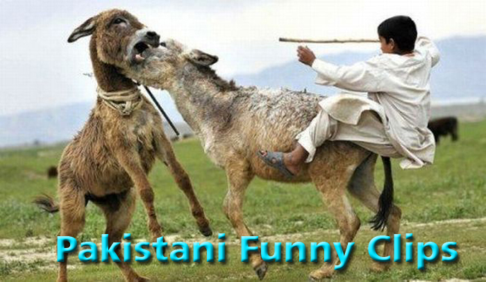 pakistani funny clips videos new