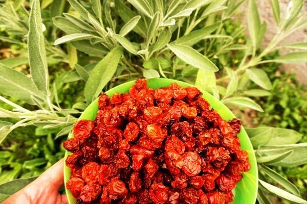pomidory koktajlowe w zalewie z oleju rzepakowego pachnące szałwią