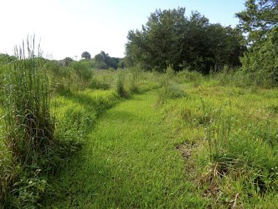 Ephemeral Wetland Habitat at Long Key Natural Area and Nature Center