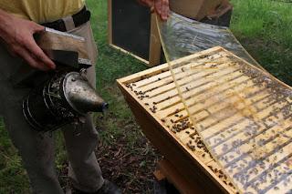 Marc nebelt die Bienen ein