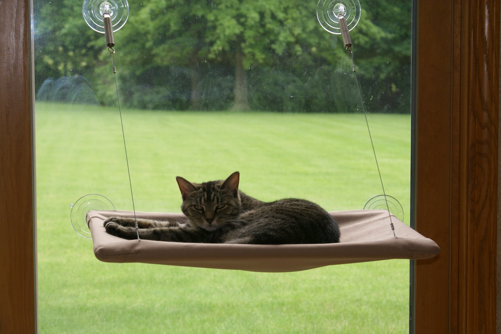 Groovy Sunny Seat Cat Bed Stores To Buy Headphones Andrewgaddart Wooden Chair Designs For Living Room Andrewgaddartcom