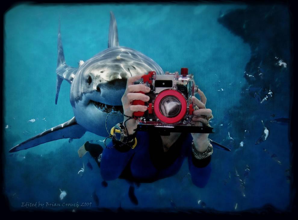 اسماك القرش تحت الماء Watch-out-for-that-s