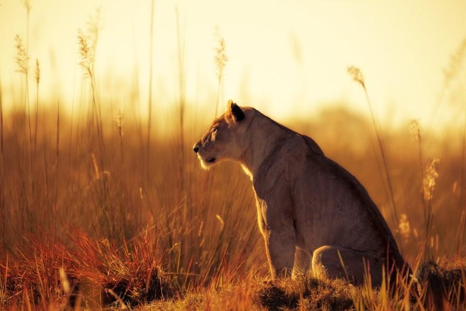 Животные в лучах солнца