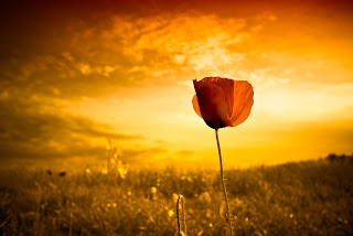 Flor contra luz