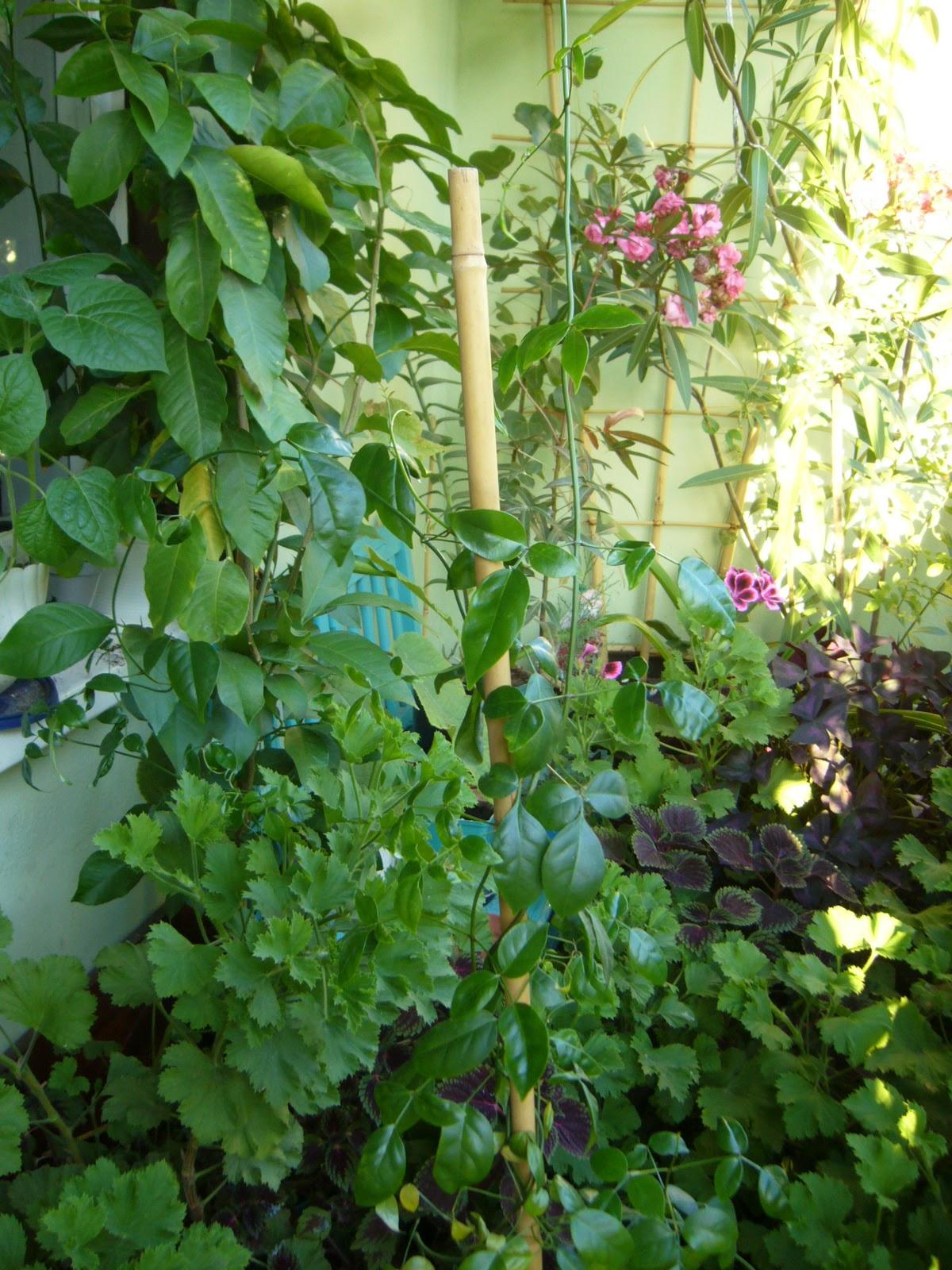 Ogrodniczka Kwiaty Na Balkon