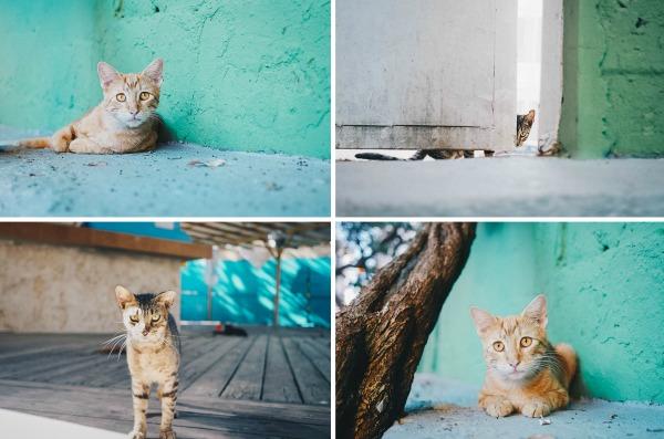 cats san juan