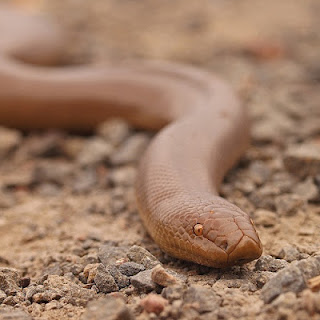 Life Is Short But Snakes Are Long Utah S Boa