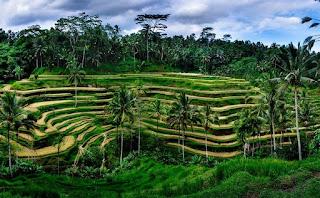 http://www.teluklove.com/2017/01/daya-tarik-objek-wisata-teracce-rice.html