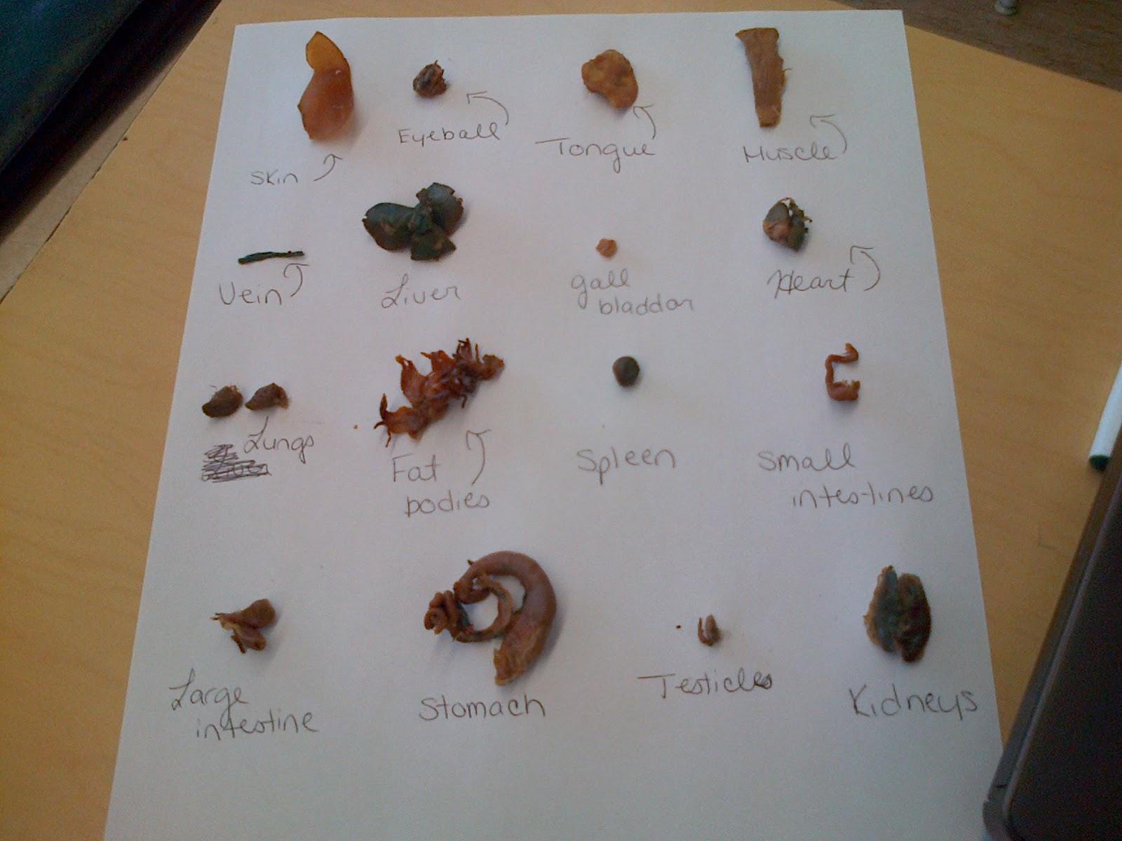 Label Frog Parts Worksheet