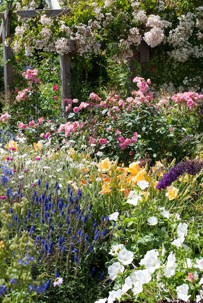 Roses In Garden: 7 Steps To Creating A Quaint English Garden