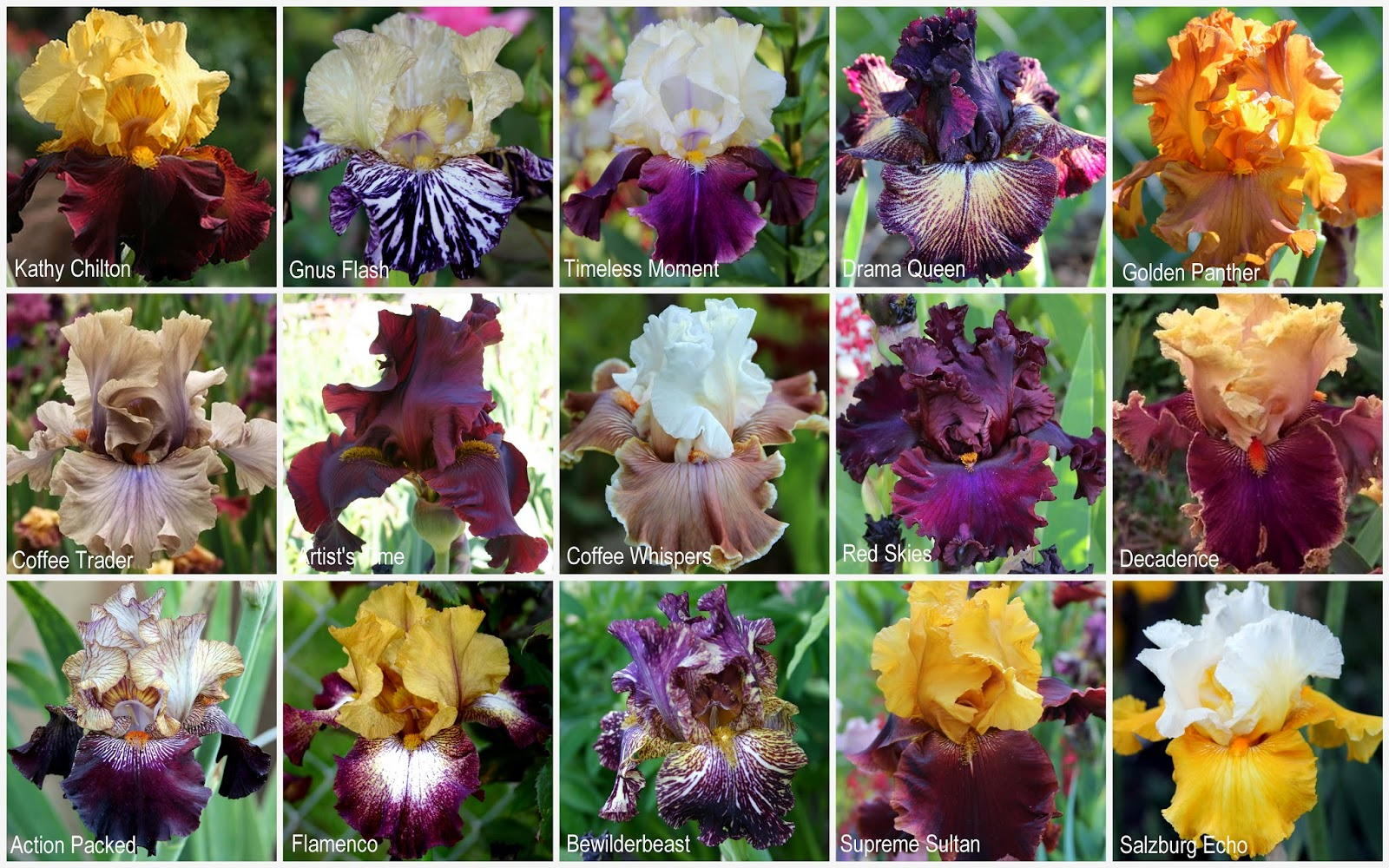 World Of Irises April 2015