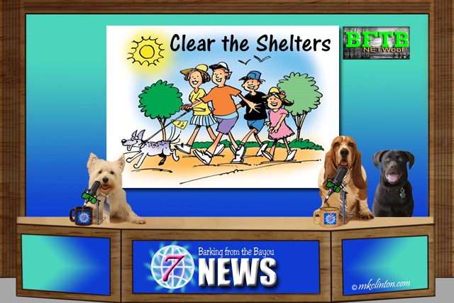BFTB NETWoof News with Clear the Shelter cartoon meme in background