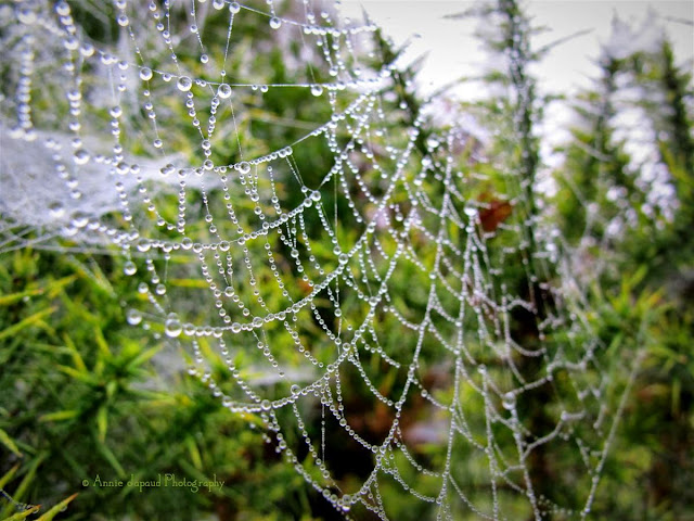 nature photography, cobweb